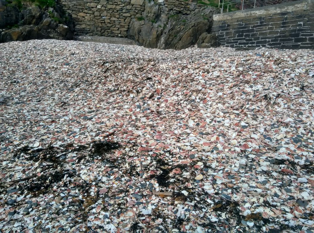 trip-iom-peel-castle-shells
